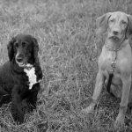 Lyca (leider verstorben) & Henry